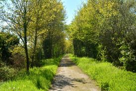 La voie verte vers l'ancienne gare Teillé - Mouzeil